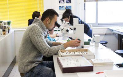 Los sectores con mayor potencial de crecimiento en León
